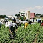 Los agricultores solicitan al gobierno que se les permita contratar a los rumanos