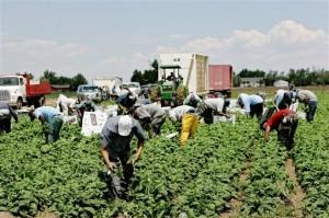 trabajadores extranjeros en campaña