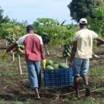 Autorización para trabajos de temporada o campaña en el marco de prestaciones transnacionales de servicios