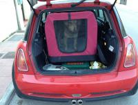 transporte perros