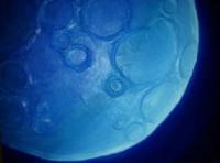 exposición in blue por paxtor