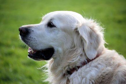 viajar al extranjero con mascotas: pasaporte veterinario