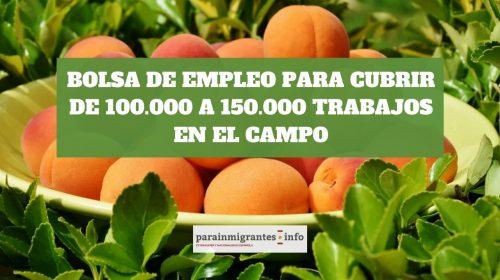 Bolsa de Empleo para trabajar en el campo: ¡Hasta 150.000 puestos!