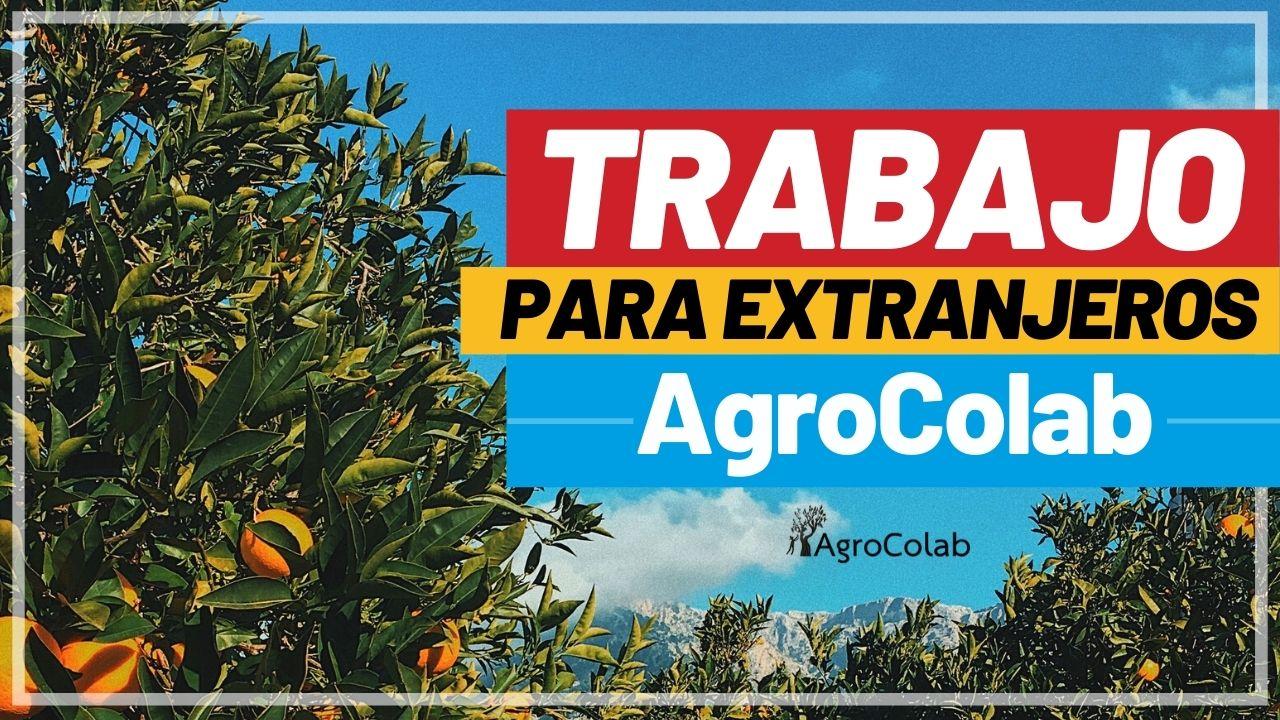 Trabajo para extranjeros: encuentra empleo con AgroColab